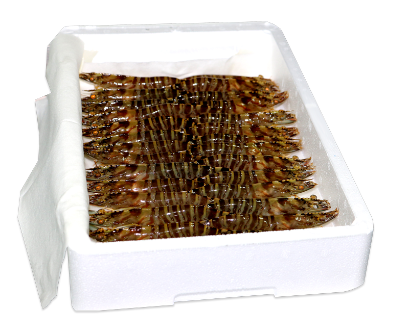 Alive tiger prawn - 1 kilogram box