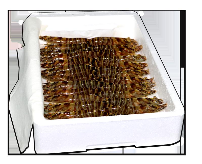 Caja de langostino vivo a domicilio de 1 kilogramo